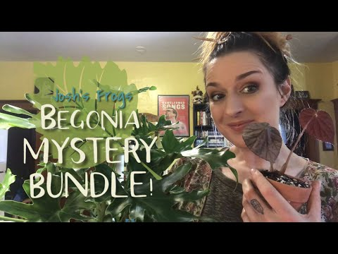 Plant Chores & Unboxing - Josh's Frogs Begonias!