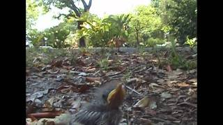 Learning to Fly:  A Bird Story