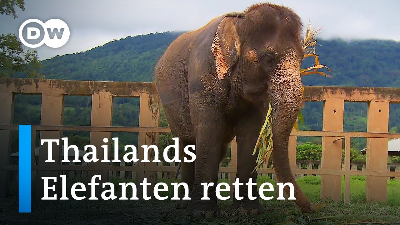 Die Elefantenretterin von Chiang Mai | Global Ideas