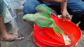 Birds Breeding Tips | नेपाल VLIP-ABOUT LV