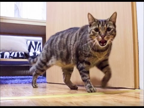 Cat Misses His Owner and He's Happy When Owner is Back - Funny Ending!