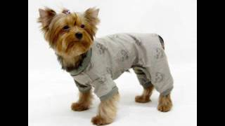 вяжем одежду собак крючком