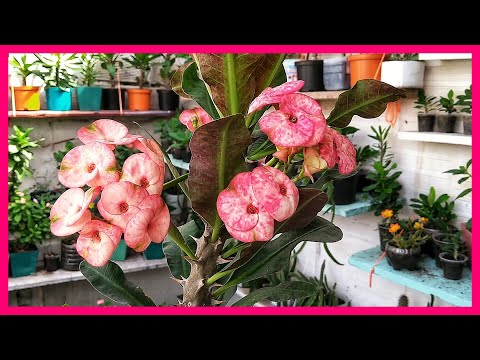 El jardín de mi madre, por el Dúo Méndez-López from YouTube · Duration:  2 minutes 42 seconds