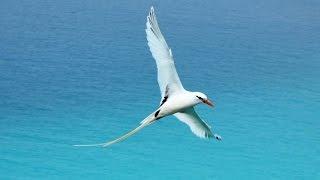 Bermuda - wildlife and heritage