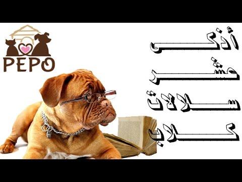 top 10 smartest dog breeds اذكى عشر انواع كلاب
