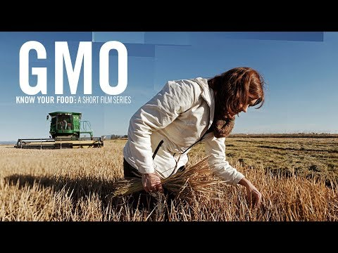 Gmo What Are Gmos And How Are They Created