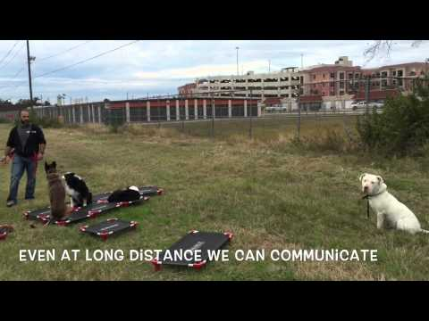 Deaf Dog Off Leash Obedience
