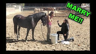 I PROPOSED.... BACK!!!!  (With a horse!)
