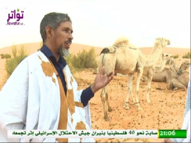 وثائقيات - مشاريع بيع اللبن بانوكشوط - قناة الموريتانية