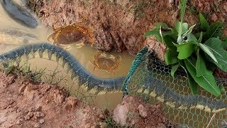 Smart Girl Make Easy  Fish Trap To Catch  Fish  Crabs And Big Water Snake