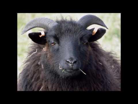Baa Baa Black Sheep REMIX! (Prod. by DJ NeonHambone)
