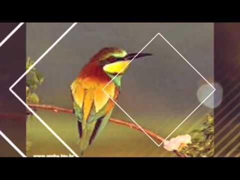 Cântico da liberdade Valdomiro Silva