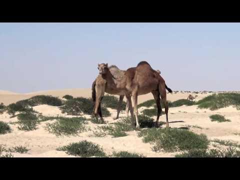 2016 - Oman Road Trip