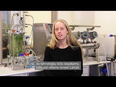 RTU zinātnieki izstrādā tehnoloģiju termoiepakojuma izgatavošanai no skuju koku zaleņa