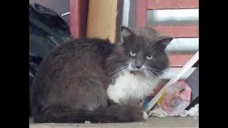 Брошенный кот сидел на холоде с запиской, в которой кто-то просил не трогать его…