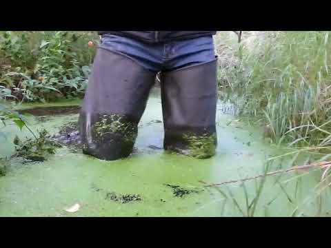 Ряска болотная - описание, рецепты, применение