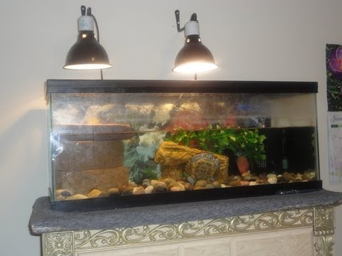 How to Setup the Lights for a Turtle Tank   YouTube
