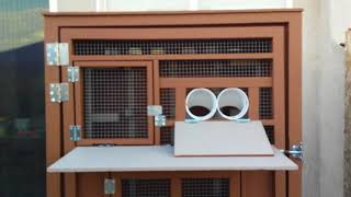LKY Roller Pigeon Kit Box (1)