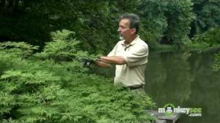 July Gardening Tips - Pruning in Summer