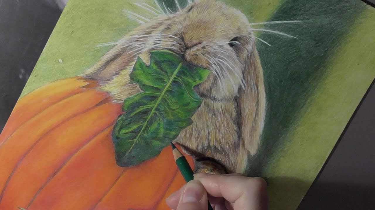 Colored pencil drawing of a rabbit  YouTube