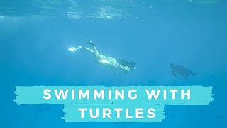 Snorkeling with Turtles & Black Sand Beaches in Hawaii