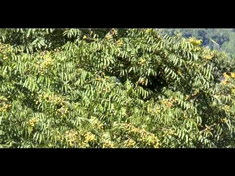 Medicinal Plants of Uttarakhand 31 Species Part 1