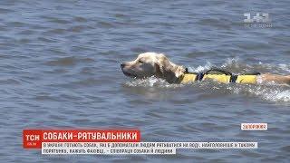 Собак-рятувальників почали навчати в Україні