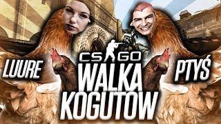 WALKA KOGUTOW /w PTYS