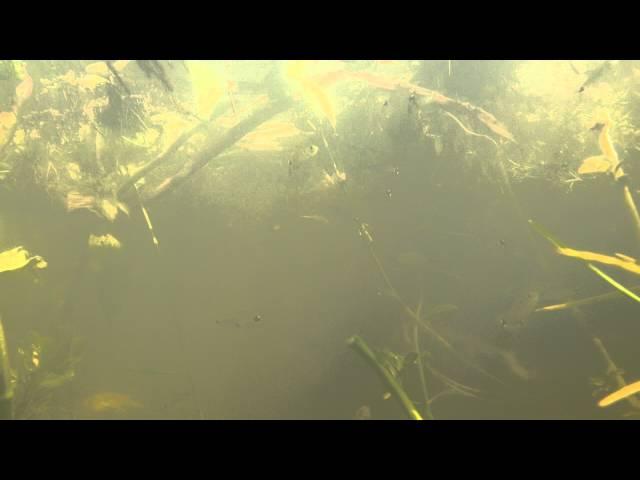 Bajo las aguas del río Corrientes