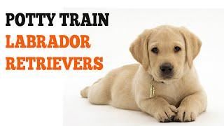 How To Potty Train Labrador Retrievers