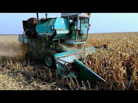 Енисей 1200 на уборке кукурузы. Урожай кукурузы  Дкс3472 и Кредо