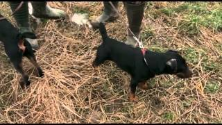 Darz Bór: Polowanie na lisa
