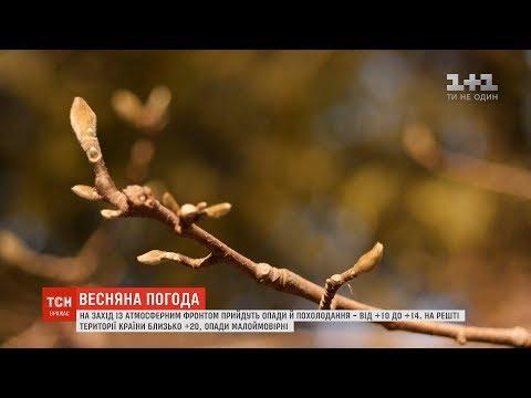 В Україну прийшла справжня весна: прогноз погоди