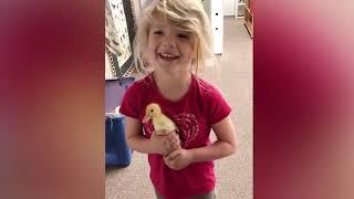 Funny Baby Video    Baby and Bird Funny Fails  مقاطع مضحكة للاطفال مع الطيور 2018