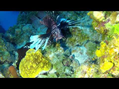 Episode 3 - Lionfish Roundup (2)
