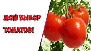 Мой выбор томатов!