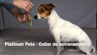 Collar de entrenamiento de Platinum Pets, Zarpazos