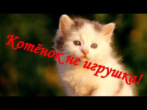 КОТЕНОК НЕ ИГРУШКА!  THE KITTEN IS NOT A TOY!