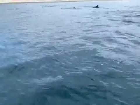 В Анапе море бурлит от дельфинов!
