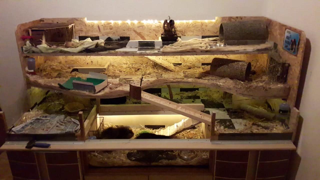 die meerschweinchen in ihrem eigenbau k fig nach 1 monat. Black Bedroom Furniture Sets. Home Design Ideas