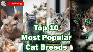 Top 10 Most Popular Cat Breeds in the World 2021