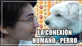 OXITOCINA | ¿Por qué queremos tanto a nuestros perros?