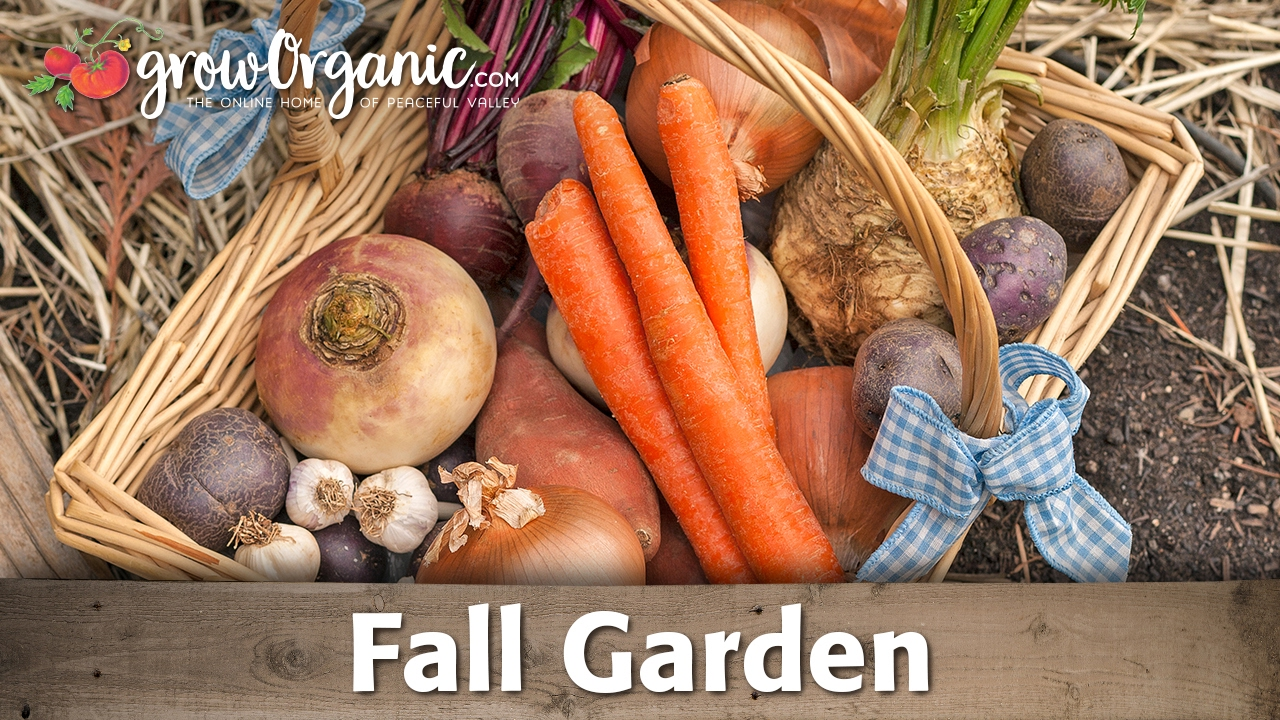 what to plant in your organic fall vegetable garden youtube