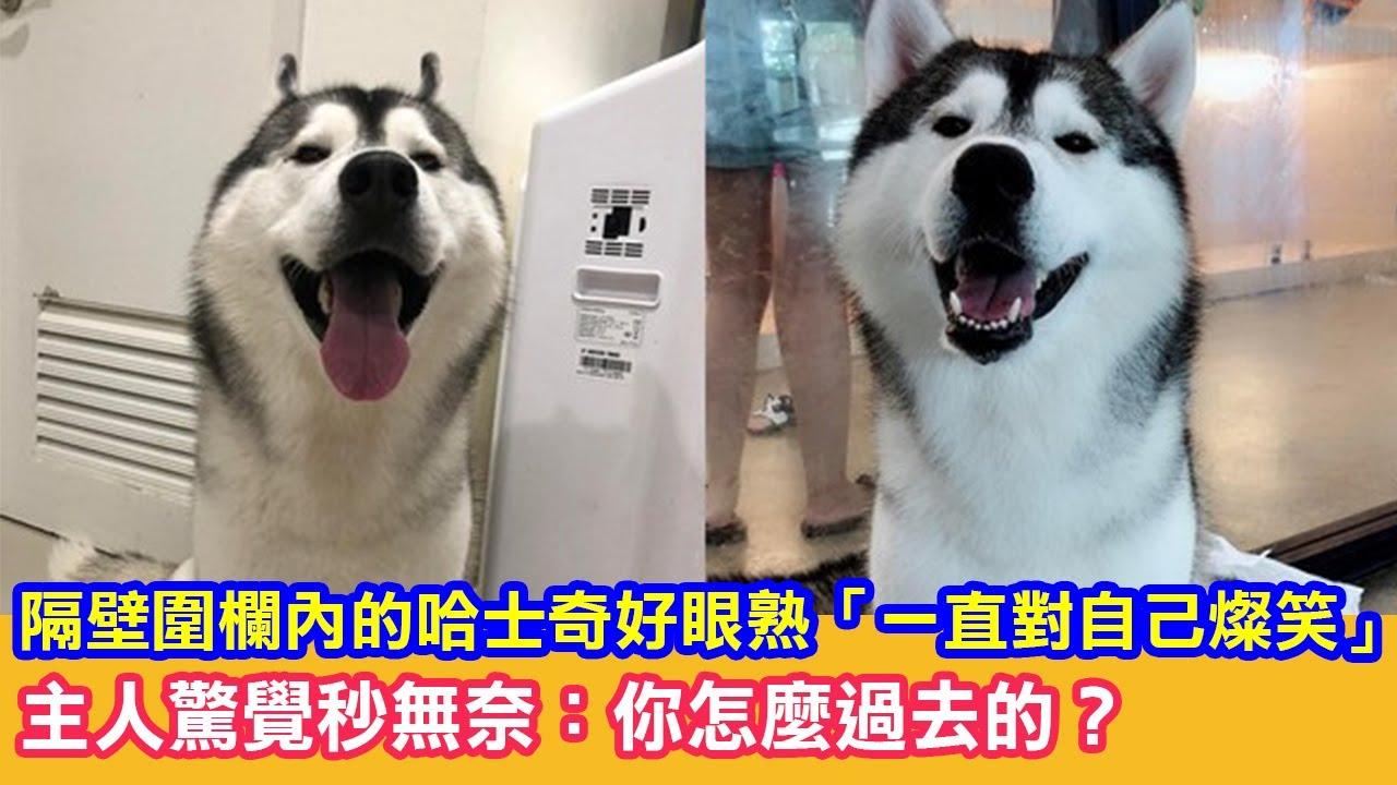 隔壁圍欄內的哈士奇好眼熟「一直對自己燦笑」主人驚覺秒無奈:你怎麼過去的?|狗狗搞笑
