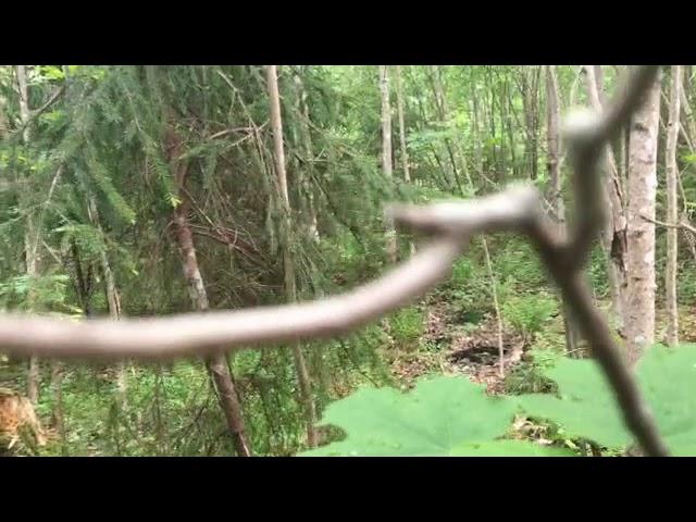 Filosofía en el bosque 12. La percepción. Parte 2.