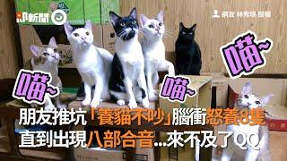 朋友推坑「養貓不吵」腦衝怒養8隻 直到出現八部合音...來不及了QQ