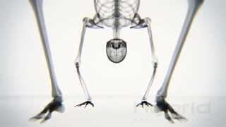 Increíble video de yoga bajo rayos X muestra al cuerpo humano como nunca lo había visto.