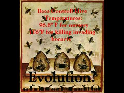 Insects Control Temperature! Evolution??