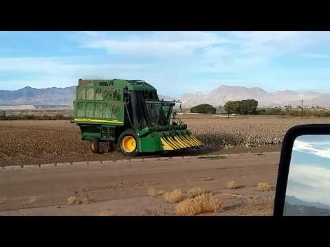 How farmers pick cotton..