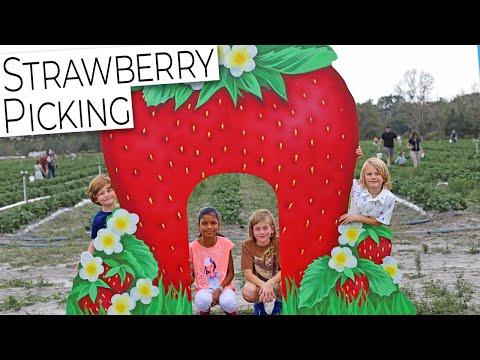 Strawberry Picking To Start Off 2020!